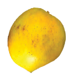 Payri-Mango