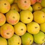 Mancurad-Mango