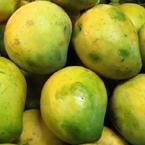 Neelam-Mango